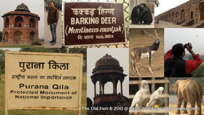 Purana Qila Zoo Collage 1