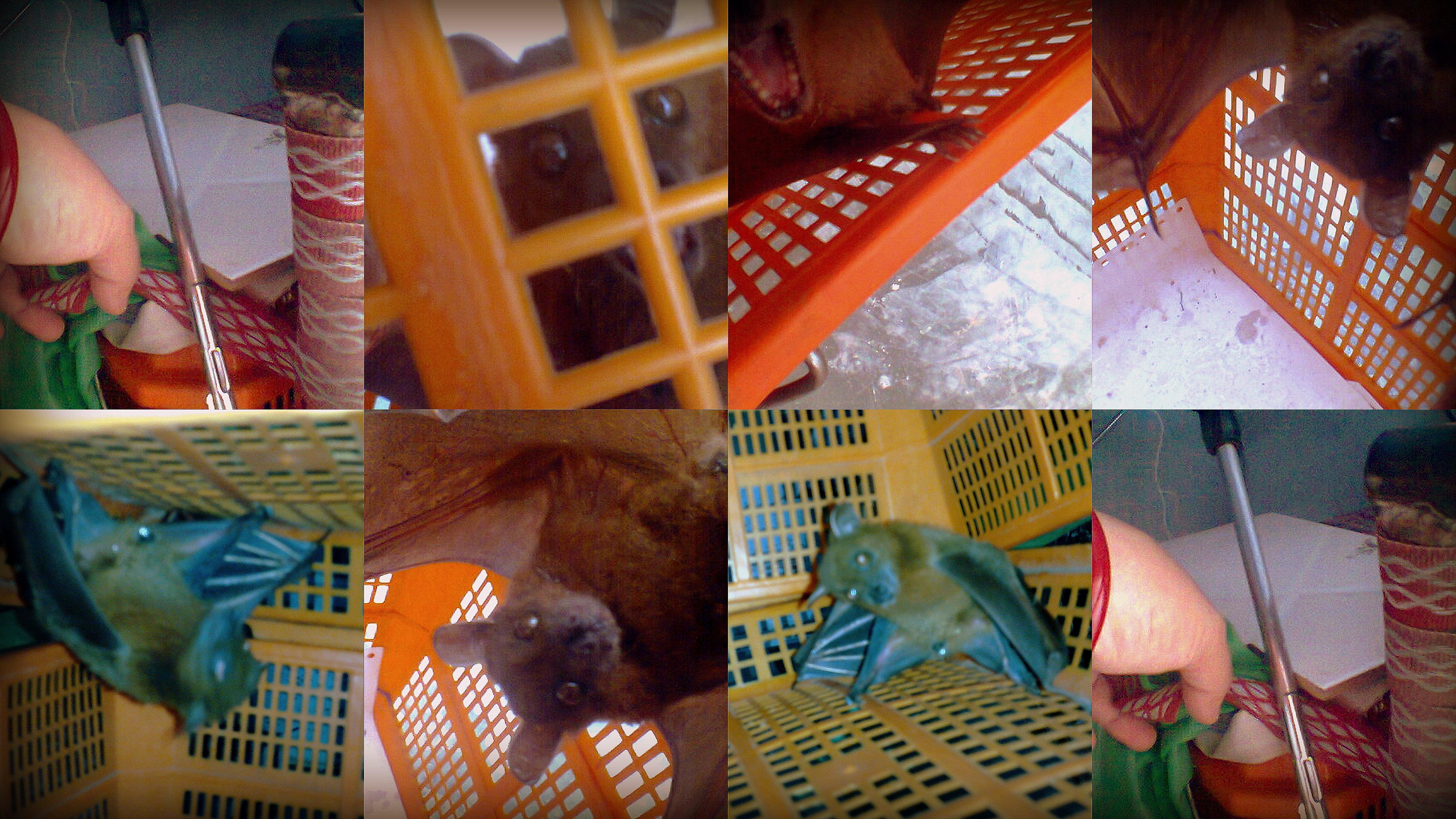 chamgu collage