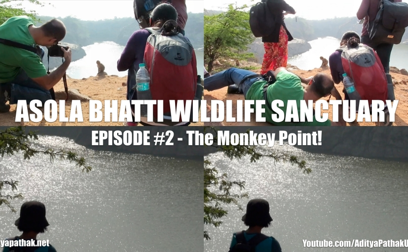 Asola Bhatti Wildlife Sanctuary – Episode 2 : The Monkey Point!