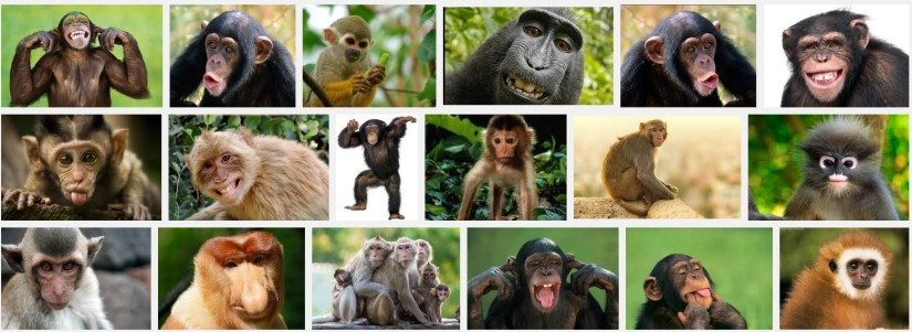 Monkey Day special :)(video)