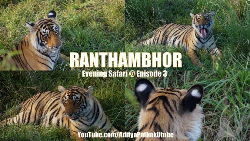 TIGERS at Ranthambhor!