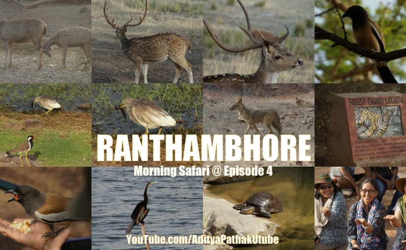 Ranthambhore – Morning Safari: Animals and Birds from the Wild :)