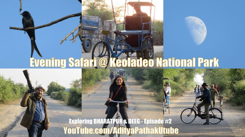 Evening Safari at Bharatpur Bird Sanctuary (Keoladeo National Park)