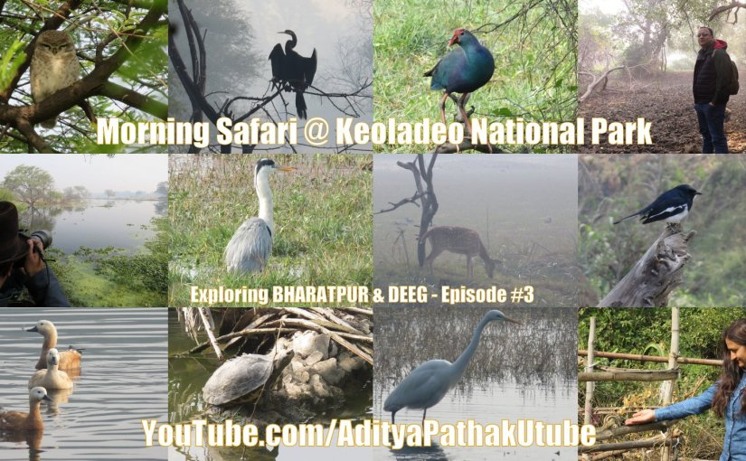 Morning Safari at Bharatpur Bird Sanctuary (Keoladeo National Park)