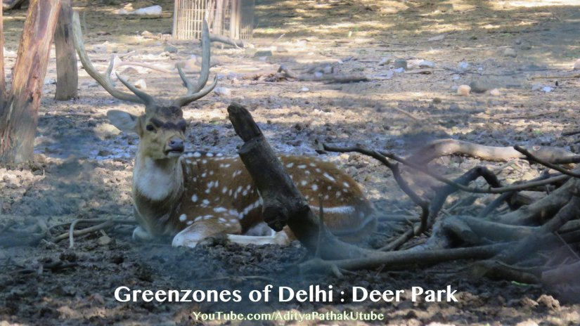 Deer Park : Greenzones of Delhi – Hauz Khas – Part 2