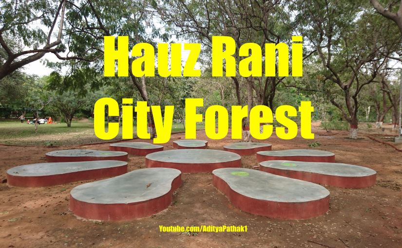City Forest Hauz Rani – Tranquil Places in Delhi